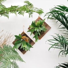 Arrange a few on a indoor wall and frame with houseplants.
