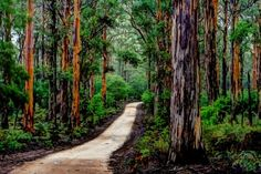 Bush walk through Boranup Forest, Margaret River