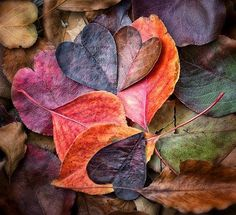 I love autumn ...here's my heart...