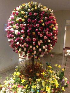 Árbol de rosas ecuatorianas