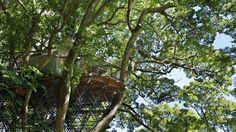 Cette cabane-salon de thé est construite comme un nid d'oiseau