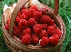 Raspberry Ketone formulas main ingredient is an enzyme found in raspberries, (known as Raspberry Ketone). This enzyme is of keen interest in the fitness and weight loss world, due to the fat burning properties. This enzyme is known to burn fat which in turn helps you lose the weight. But you can speed up how fast it works by using with Acai berry and Green tea. Combined they work together even more powerful and faster burning fat fighter and energizer
