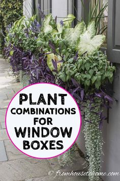 I love these window box ideas! Some of the flower boxes are for full sun and some for shade so you can find container plant combinations that will work in your summer garden design. And there's a way to automate watering the containers so they can actually be low maintenance which is definitely a bonus. #fromhousetohome #flowerboxes #gardeningtips #gardenideas #containers #gardendesign