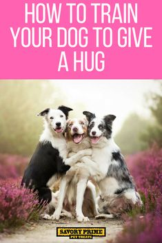 Good Dog Training Techniques For Bonding With Your Pet – Today's Dog Trainer Dog Training Techniques, Dog Training Tips, Potty Training, Leash Training, Training Videos, Collie, Dog Minding, Dog Barking, Pet Treats
