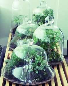 Now offering terrariums workshops in Atlanta and surrounding cities! Book online reservations for a spot with someone on the workshop team! | ALLTHEBLOOM.COM