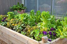 small raised vegetable gardens ideas tips plants patio decorating