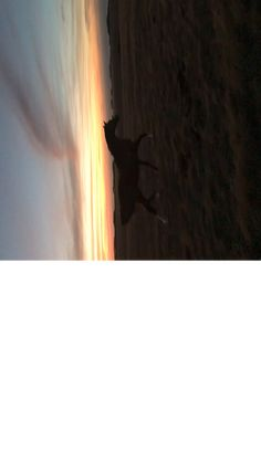 Danson Wonder at Oceanview Eco Villas Kangaroo Island Danson Wonder en Oceanview Eco Villas Isla Canguro Cute Horses, Pretty Horses, Horse Love, Beautiful Horses, Animals Beautiful, Animals And Pets, Funny Animals, Cute Animals, Horse Videos