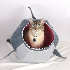 For a cat that seeks adventure: great white shark kitty bed from The Cat Ball