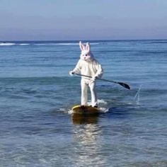 This is what an Easter Bunny does in Florida!