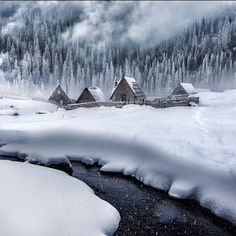 Legends of the winter | Photography by Adnan Bubalo #naturegeography by nature.geography