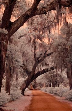 winter / infrared photography / #Savannah GA USA ** There is rarely snow in Savannah.