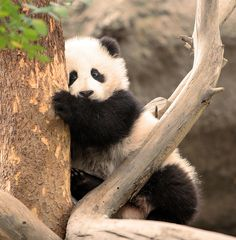 Su Lin's little sister | Flickr - Photo Sharing!