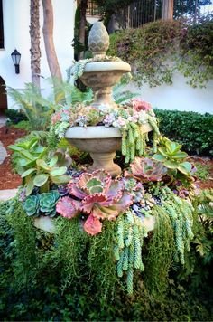 succulent fountain aaah it has red lettuce thats one of my faves! i had a MASSIVE one of those but the frost got it :(