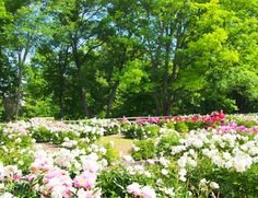 The Most Beautiful Place in Each State Michigan,  Nichols Arboretum