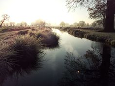 Bushy Park River, Park, Photography, Outdoor, Outdoors, Parks, Outdoor Games, Photograph, Outdoor Living