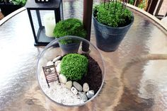 mesa fada do jardim de vidro terrarrium