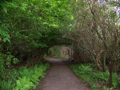 Path into the Armadale Castle woods, Sleat, Isle of Skye