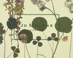 ザ・ハーブ ガーデン コレクション | ジョー マローン ロンドン