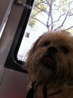 Sheryl sent us a pic of her doggie — or Ewok, maybe? Last time, Admiral Ackbar was warning us all t… Admiral Ackbar, Ewok, Pets, Animals, Animales, Animaux, Animal, Animais, Animals And Pets