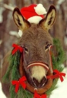 Christmas Donkey - almost as cute as the ornament that was fought over at the ornament exchange yesterday! Christmas Donkey, Noel Christmas, Christmas Animals, Country Christmas, Winter Christmas, All Things Christmas, Italian Christmas, Natal Country, Animals Beautiful