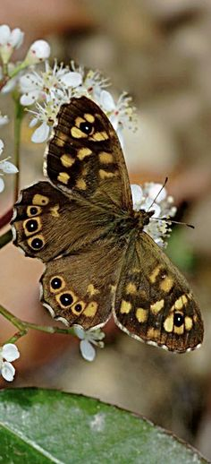Spring Butterfly. #flutterby #butterfly