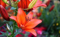 În casele în care există rugăciune, familia rămâne unită | La Taifas Let It Be, Plants, Flower, Medicine, Plant, Flowers, Planets