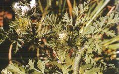 Καντζηλάρης Γ. (2007) 274 Cyprus Food, Virtual Museum, Plants, Planters, Plant, Planting