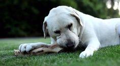 Can Dog Eat a Ham Bone