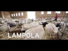 (7) Lihan reitti - YouTube Youtube, Animals, Animales, Animaux, Animal, Animais, Youtubers, Youtube Movies