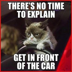 the Times Grumpy Cat Broke the Fourth Wall Grumpy cat quotes, grumpy cat meme .For more grumpy cat humor visit /Grumpy cat quotes, grumpy cat meme .For more grumpy cat humor visit / Grumpy Cat Quotes, Meme Grumpy Cat, Cat Jokes, Funny Cat Memes, Cats Humor, Memes Humor, Top Memes, Funniest Memes, Funny Cartoons