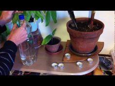 Vacances - Astuces pour arroser ses plantes pendant de longues absences - Conseils Jardinage