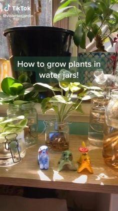 Indoor Garden, Garden Plants, Indoor Plants, Household Plants, Inside Plants, Plant Aesthetic, House Plant Care, Bedroom Plants, Water Plants