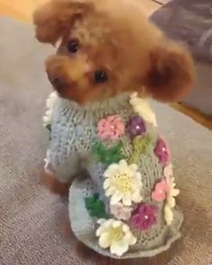 """I can't stay in the camera if you keep moving, camera lady"". Someone takes a great deal of time to dress this one perfectly. Cute Funny Animals, Cute Baby Animals, Funny Dogs, Animals And Pets, Animales Gif, Cute Puppies, Cute Dogs, Cute Babies, Dogs And Puppies"