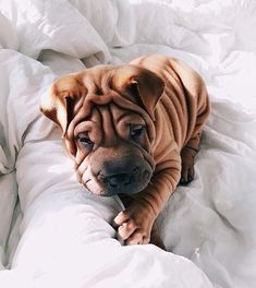 15 Things Every Puppy Owner Must Have Raising a puppy can be exciting, but also time consuming and stressful. To take the stress off of your plate, here's a list of items every puppy owner must have for their new dog. Cute Baby Animals, Animals And Pets, Funny Animals, Cute Puppies, Cute Dogs, Dogs And Puppies, Doggies, Shar Pei Puppies, Golden Retriever