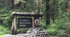 Bosque lluvioso de Hoh y costa de Olympic