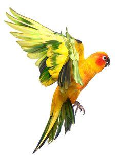citrus wings