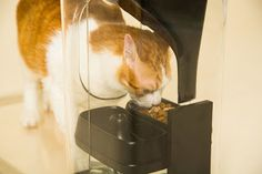 Track Your Cat's Health With This Smart Cat Auto Feeder!  #cats #catcare #cathealth