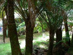 Derreen Gardens - Flip van den Elshout - Picasa Webalbums