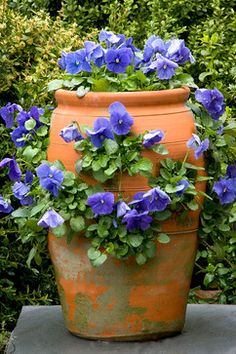 Strawberry Pot with Pansies.../