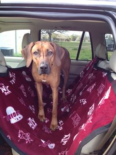 Doggy car seat cover...think I need one of these :)
