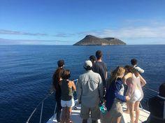 #IslaDaphne Mayor  #IslasGalapagos Vive tu mejor #aventura con #Rutaviva la  #FamiliaViajeraEcuador .  Los mejores #HOTELES DESTINOS y SERVICIOS encuéntralos en http://ift.tt/2nuTUfm Photo:  @cjjurado97  #EcuadorNow#ViajaPrimeroEcuador#FeelAgainInEcuador  #Ecuador  #allyouneedisecuador #travelblogger#paisajesecuador #mochileros #natgeotravel#SoClose #LikeNoWhereElse #amor  #AllInOnePlace#instatravel #TraveltheWorld #primerolacomunidad#World_Shots #live #familiaviajera #WorldCaptures…