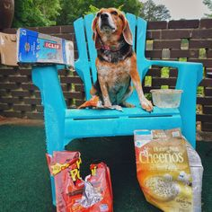305 Best Beagle Friendzy images | Beagle, Breeds, Dogs