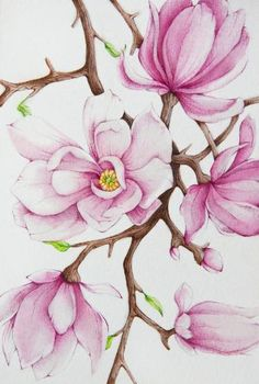 View Tanya Azarchik's Artwork on Saatchi Art. Find art for sale at great prices from artists including Paintings, Photography, Sculpture, and Prints by Top Emerging Artists like Tanya Azarchik. Watercolor Flowers, Watercolor Paintings, Original Paintings, Original Art, Painting Flowers, Painting Tips, Watercolours, Magnolia Paint, Magnolia Flower