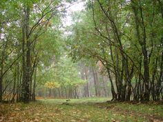 FOTO:Bosque de robles