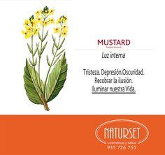 Mustard Luz Interna-Flores de Bach de NATURSET Bach Flowers, Health And Beauty Tips, Flower Cards, Ayurveda, Flower Power, Zen, Remedies, Therapy, Nature