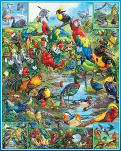 Birds of the World - 1000pc Jigsaw Puzzle by White Mountain