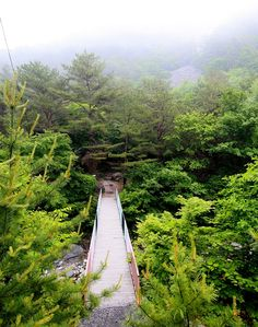 The Gariwangsan Forest is located in Jeongseon, Gangwon Province. It's known for its broadleaf trees.
