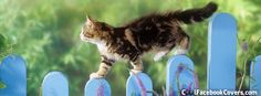 Cat on fence, Facebook Cover