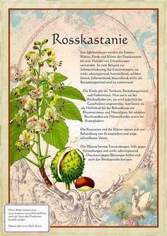 Rosskastanie http://www.kraeuter-verzeichnis.de/