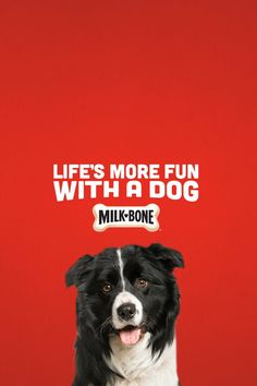 Clearly, people don't understand what real fun is. #DogLife #MilkBone Backyard Furniture, Diy Furniture Projects, Bedroom Furniture, Bedroom Decor, Diy Magazine Holder, Interior Design Guide, Dog Milk, Gamer Room, Needle Felted